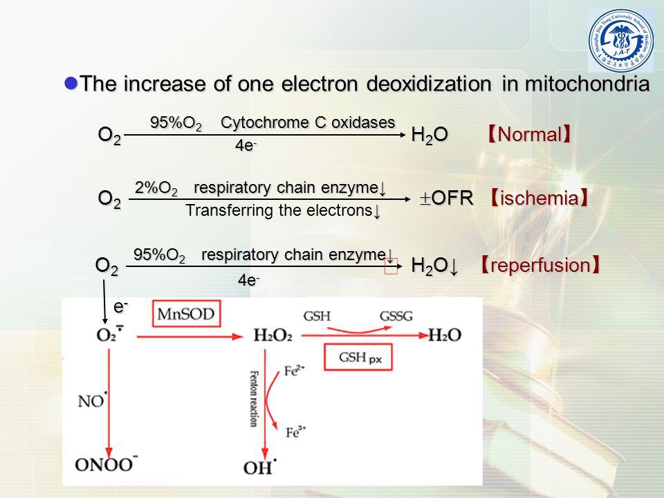 The increase of one electron deoxidization in mitochondria The increase of one electron deoxidization in mitochondria 95%O 2 Cytochrome C oxidases O 2 H 2 O 【 Normal 】 O 2 H 2 O 【 Normal 】 4e - O 2  OFR 【 ischemia 】 2%O 2 respiratory chain enzyme↓ 4e - 95%O 2 respiratory chain enzyme↓ O 2 H 2 O↓ 【 reperfusion 】 e-e-e-e- ↓ Transferring the electrons↓ ╳