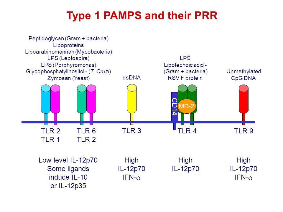 CD14 TLR 4 MD-2 TLR 3TLR 9TLR 2 TLR 1 TLR 6 TLR 2 Type 1 PAMPS and their PRR Peptidoglycan (Gram + bacteria) Lipoproteins Lipoarabinomannan (Mycobacteria) LPS (Leptospira) LPS (Porphyromonas) Glycophosphatylinositol - (T.