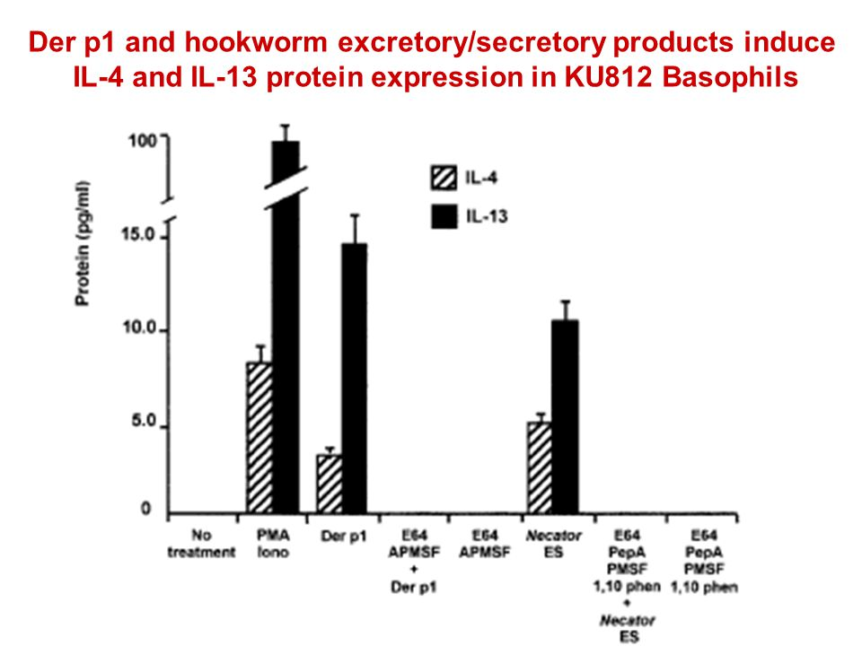 Der p1 and hookworm excretory/secretory products induce IL-4 and IL-13 protein expression in KU812 Basophils