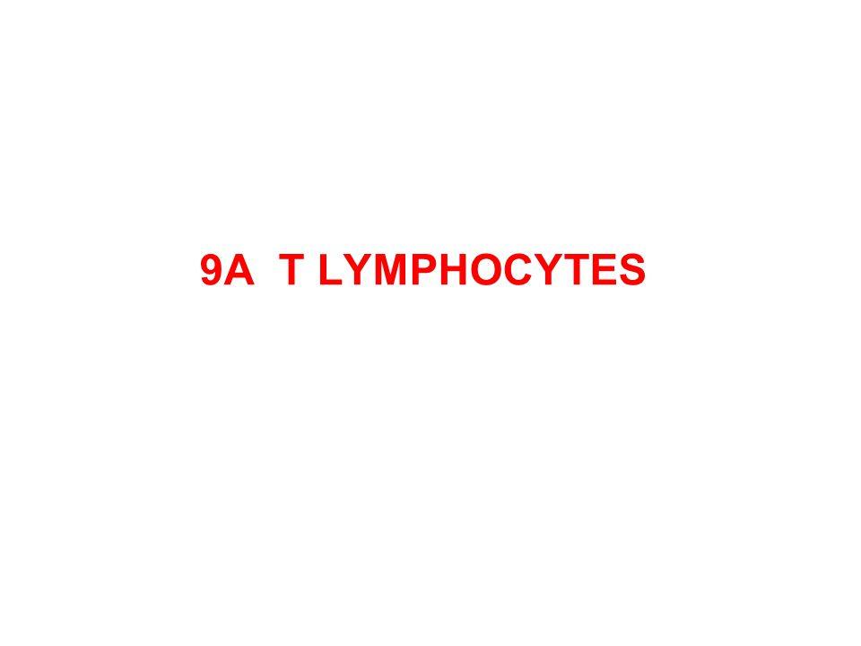 9A T LYMPHOCYTES