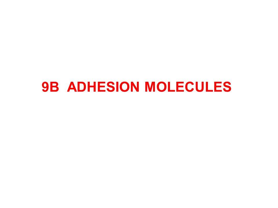 9B ADHESION MOLECULES