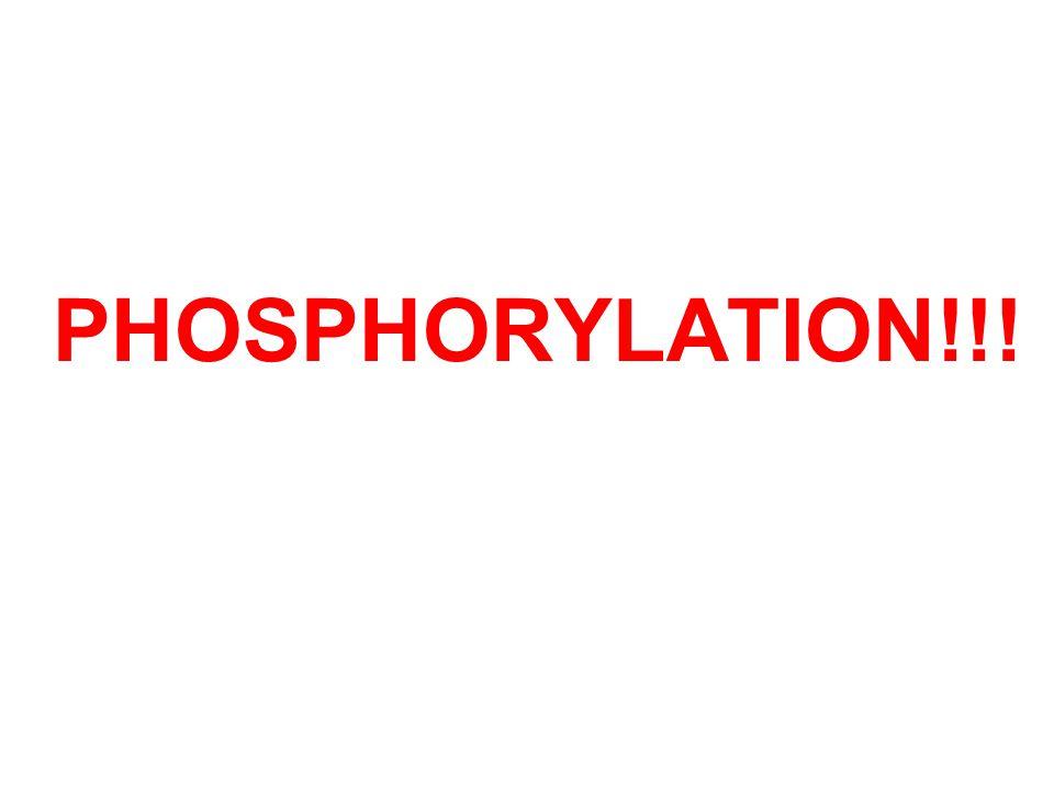 PHOSPHORYLATION!!!