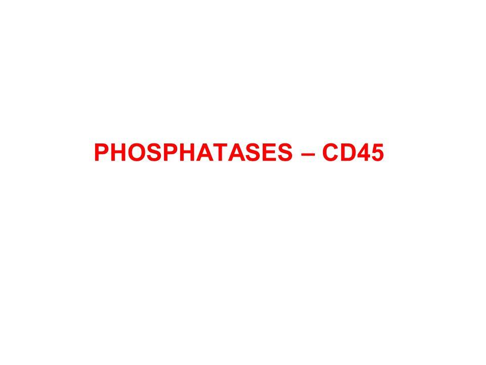 PHOSPHATASES – CD45