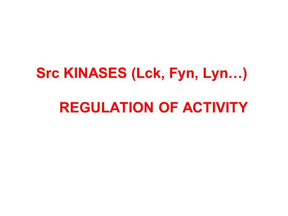 Src KINASES (Lck, Fyn, Lyn…) REGULATION OF ACTIVITY