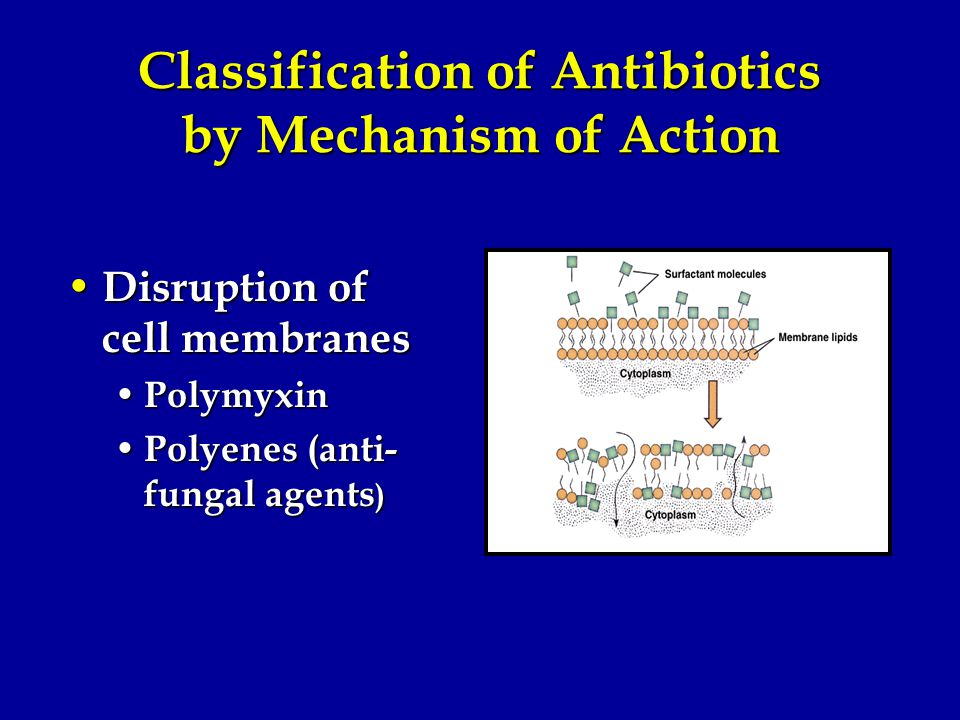Classification of Antibiotics by Mechanism of Action Disruption of cell membranes Disruption of cell membranes Polymyxin Polymyxin Polyenes (anti- fungal agents ) Polyenes (anti- fungal agents )