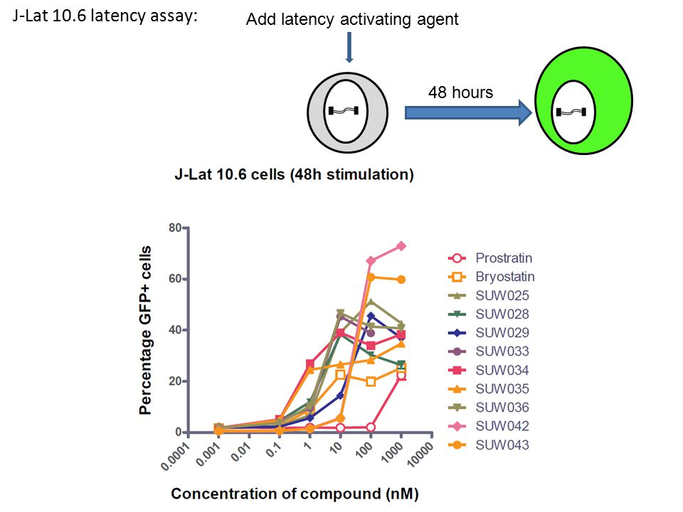 J-Lat 10.6 latency assay: 48 hours Add latency activating agent