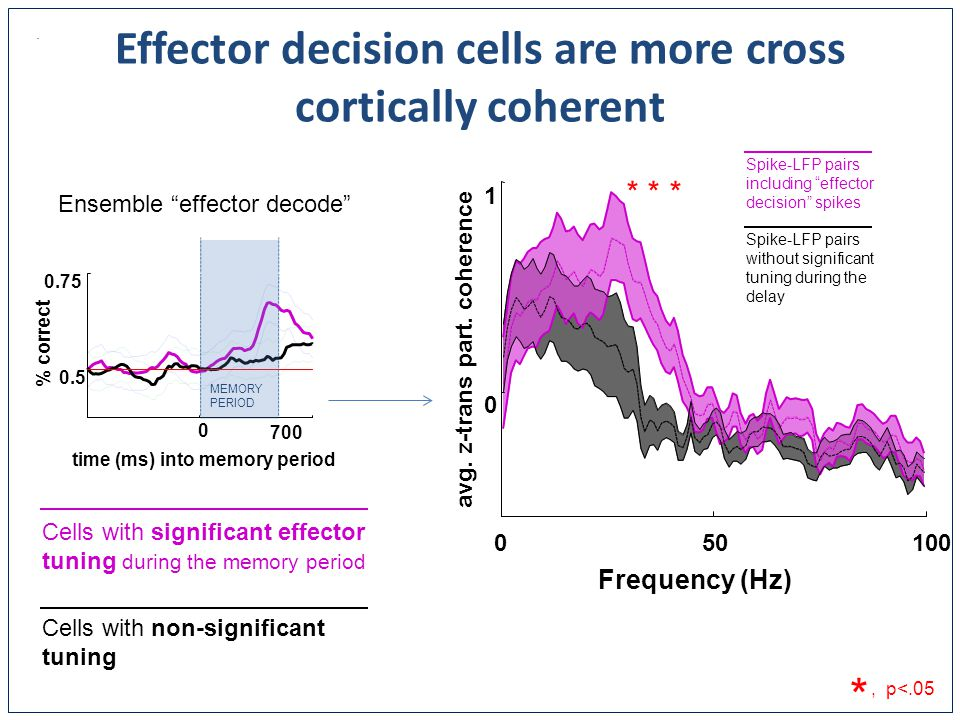 Effector decision cells are more cross cortically coherent 0 700 0.5 0.75 time (ms) into memory period % correct Frequency (Hz) avg.