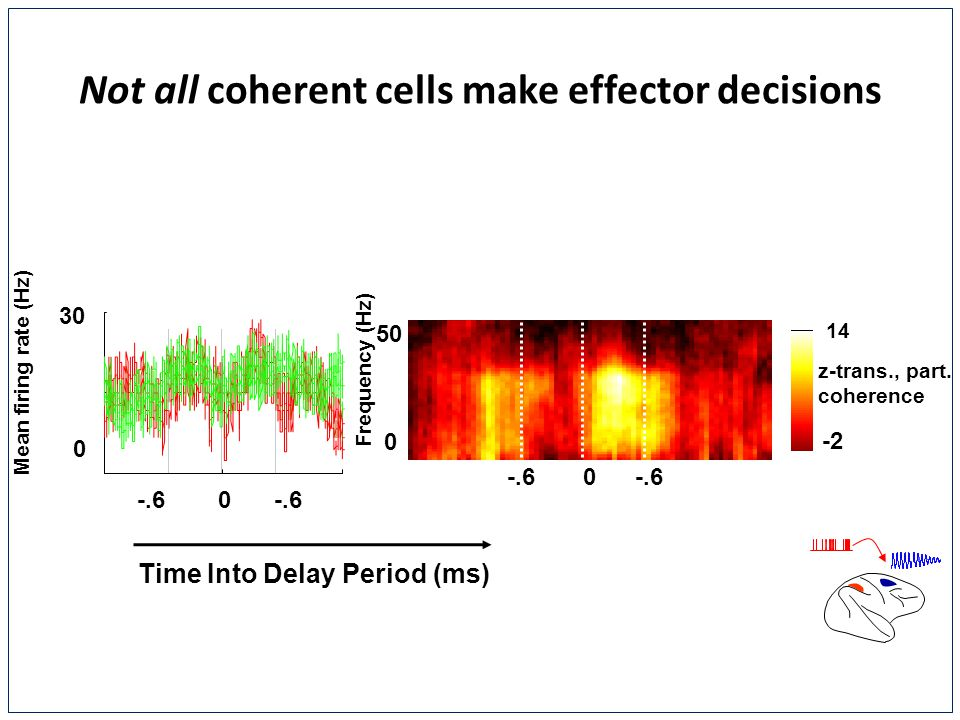 0 30 Time Into Delay Period (ms) Mean firing rate (Hz) 0-.6 0 Not all coherent cells make effector decisions 14 -2 Frequency (Hz) 0 50 z-trans., part.