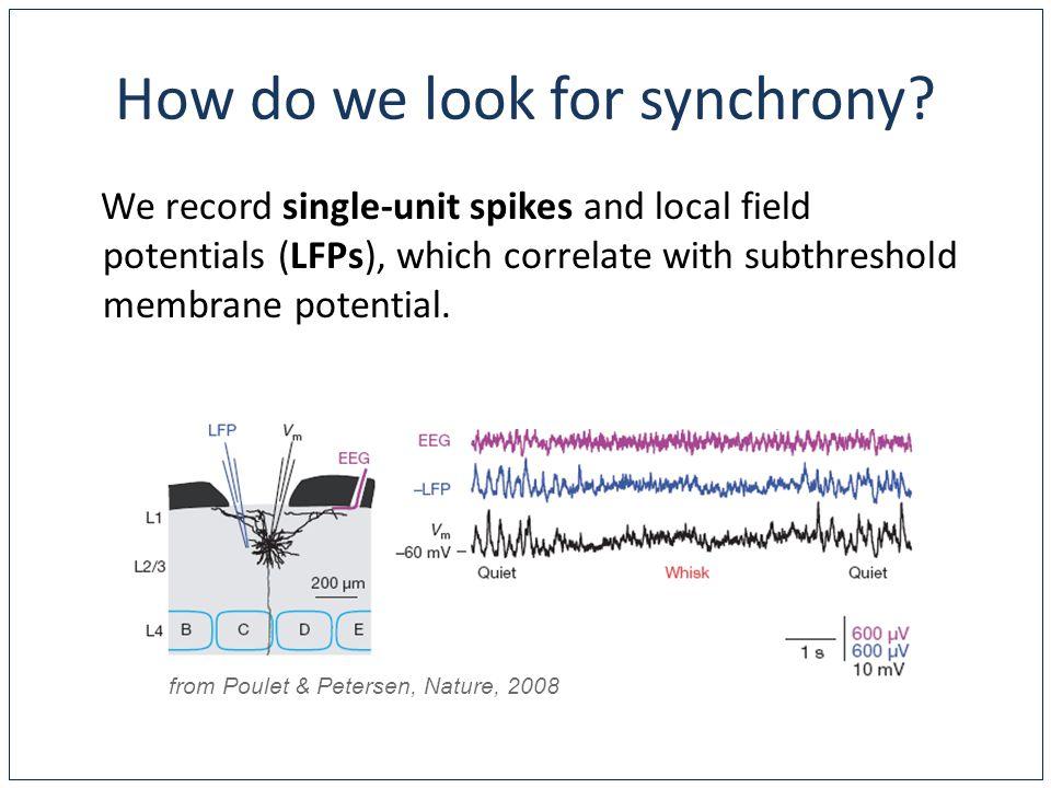 Where do we look for synchrony.