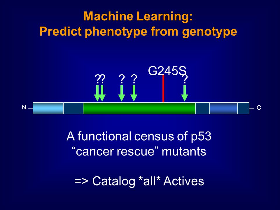 N C Machine Learning: Predict phenotype from genotype G245S .