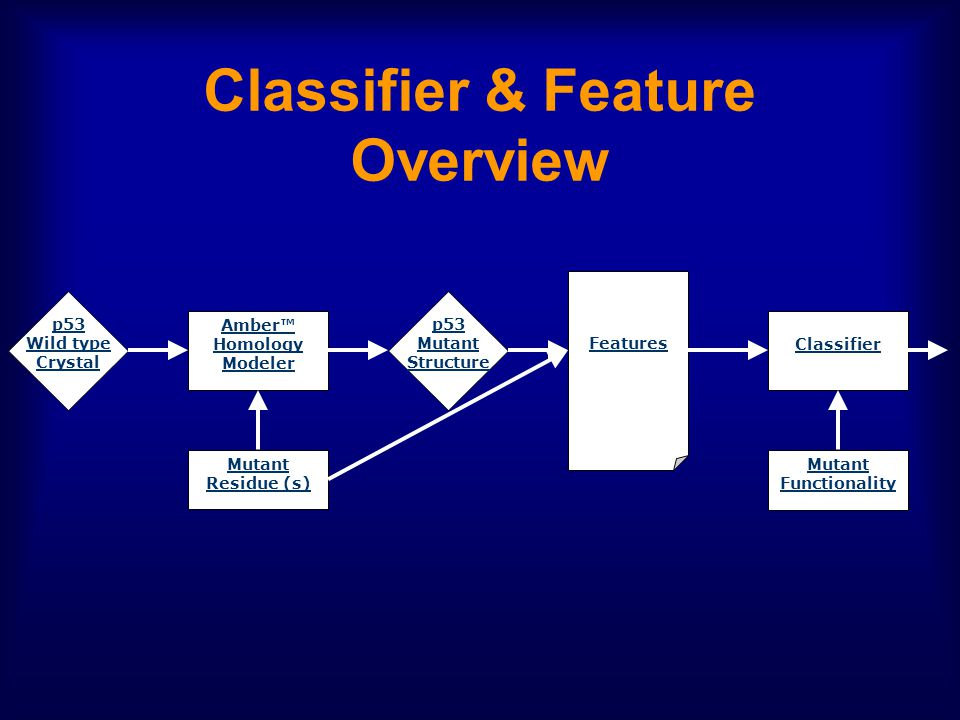Classifier & Feature Overview p53 Wild type Crystal p53 Mutant Structure Amber™ Homology Modeler Mutant Residue (s) Features Classifier Mutant Functionality