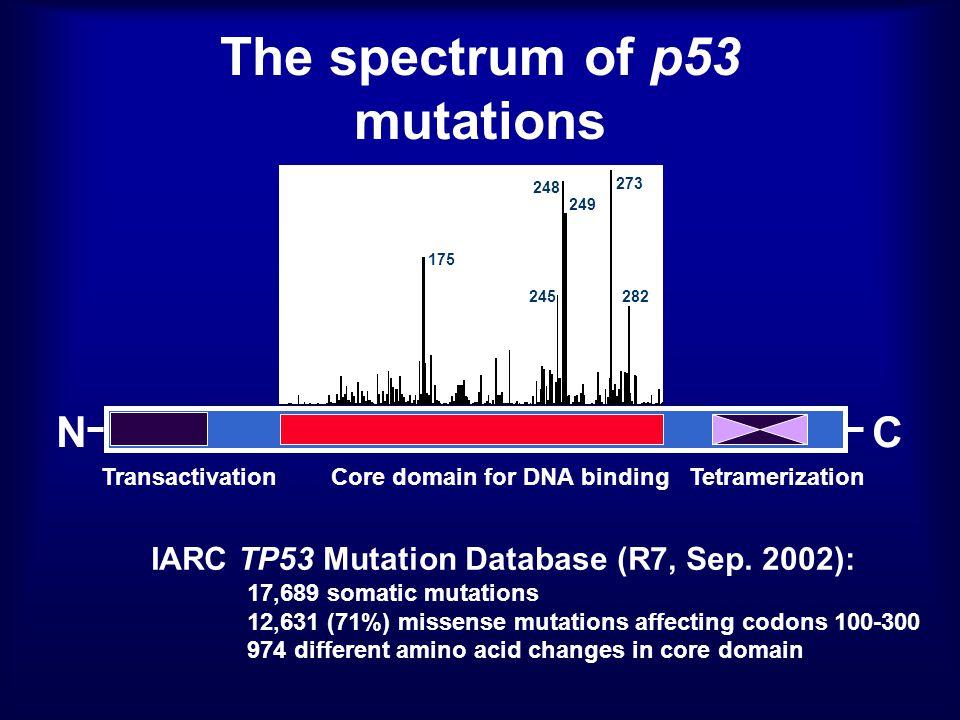 NC 175 245 248 273 282 249 Core domain for DNA bindingTetramerizationTransactivation IARC TP53 Mutation Database (R7, Sep.