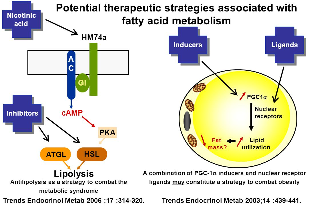 A combination of PGC-1  inducers and nuclear receptor ligands may constitute a strategy to combat obesity PGC1  Lipid utilization Fat mass? Nuclear