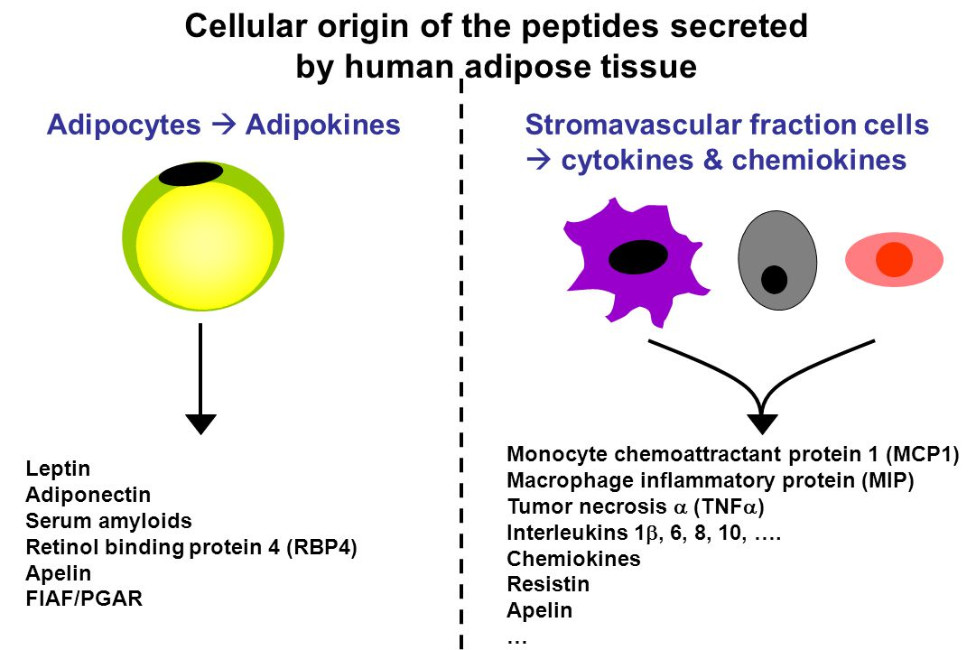 Cellular origin of the peptides secreted by human adipose tissue Adipocytes  AdipokinesStromavascular fraction cells  cytokines & chemiokines Monocy