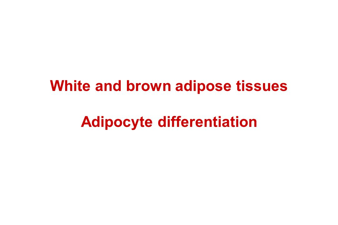 White and brown adipose tissues Adipocyte differentiation