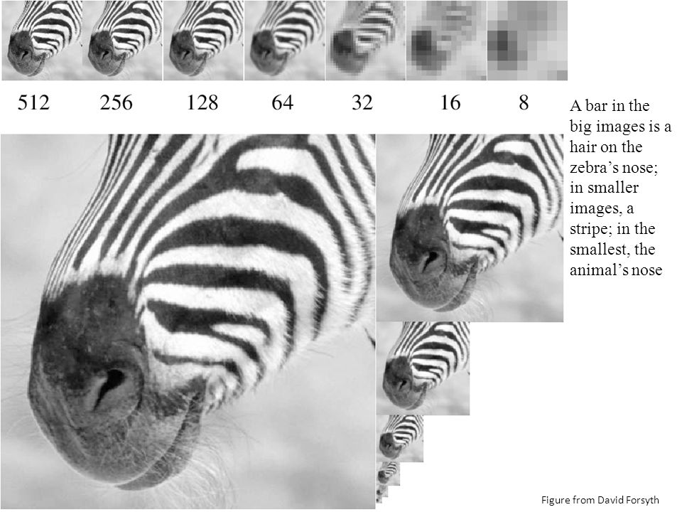 A bar in the big images is a hair on the zebra's nose; in smaller images, a stripe; in the smallest, the animal's nose Figure from David Forsyth