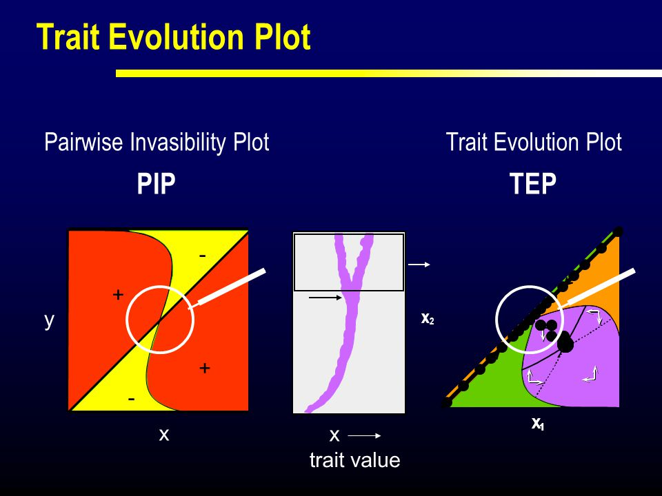 X X 1 2 trait value x Trait Evolution Plot TEP x2x2 Trait Evolution Plot y x + + - - Pairwise Invasibility Plot PIP
