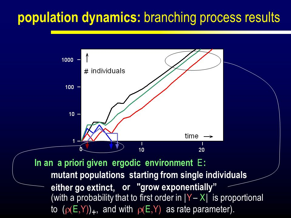population dynamics: branching process results or