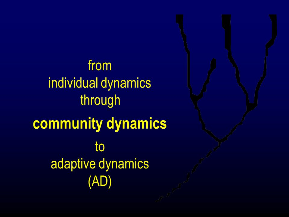more about adaptive branching evolutionary time t i m e t r a i t fitness minimum population