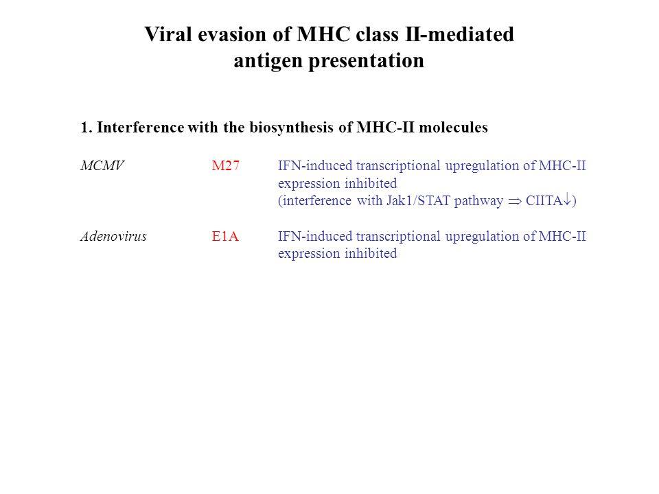 Viral evasion of MHC class II-mediated antigen presentation 1.
