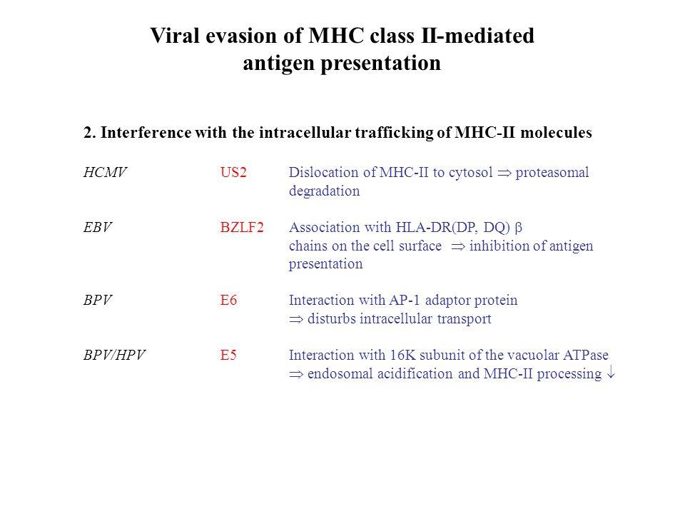 Viral evasion of MHC class II-mediated antigen presentation 2.