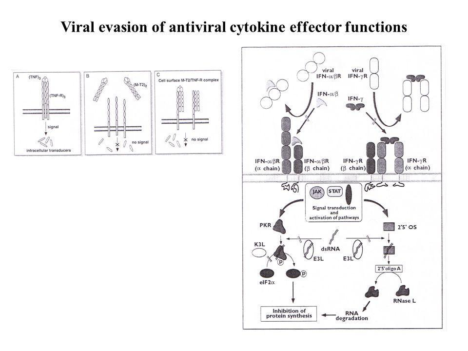 Viral evasion of antiviral cytokine effector functions