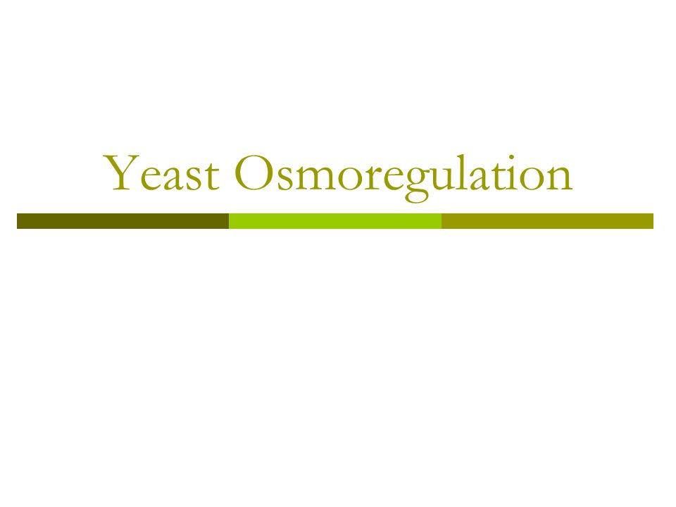 Yeast Osmoregulation