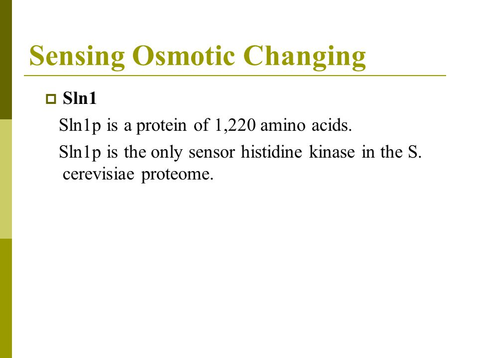 Sensing Osmotic Changing  Sln1 Sln1p is a protein of 1,220 amino acids.