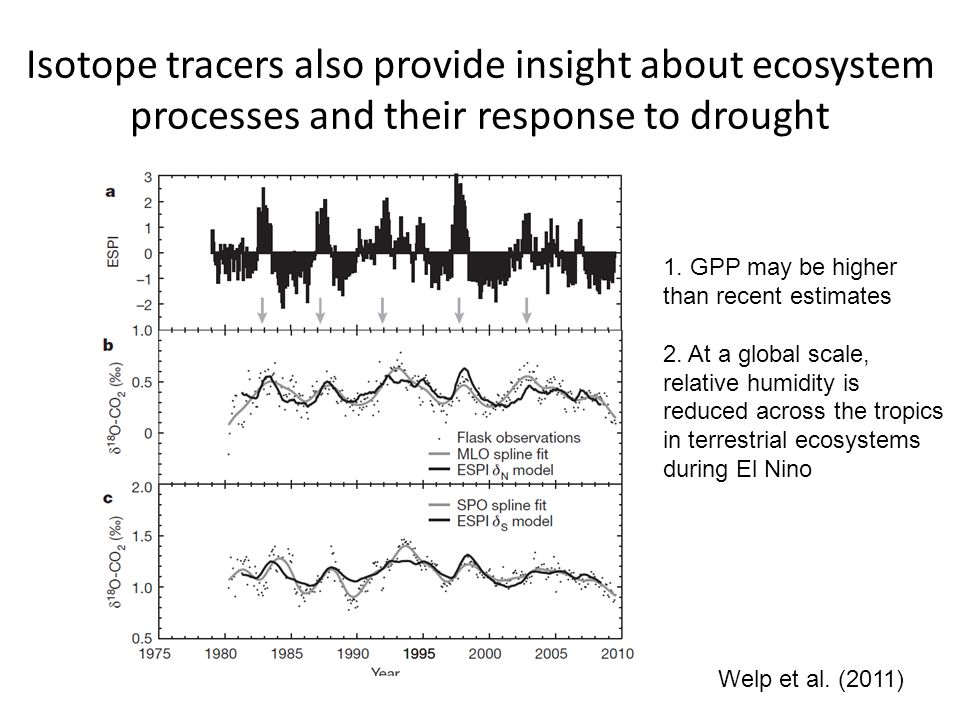 Isotope tracers also provide insight about ecosystem processes and their response to drought Welp et al. (2011) 1. GPP may be higher than recent estim