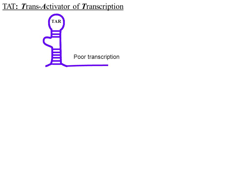 TAR Poor transcription TAT: Trans-Activator of Transcription
