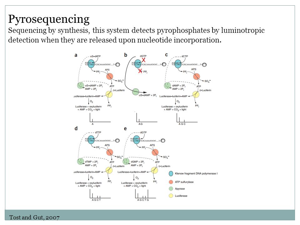 Pyrosequencing Sequencing by synthesis, this system detects pyrophosphates by luminotropic detection when they are released upon nucleotide incorporation.