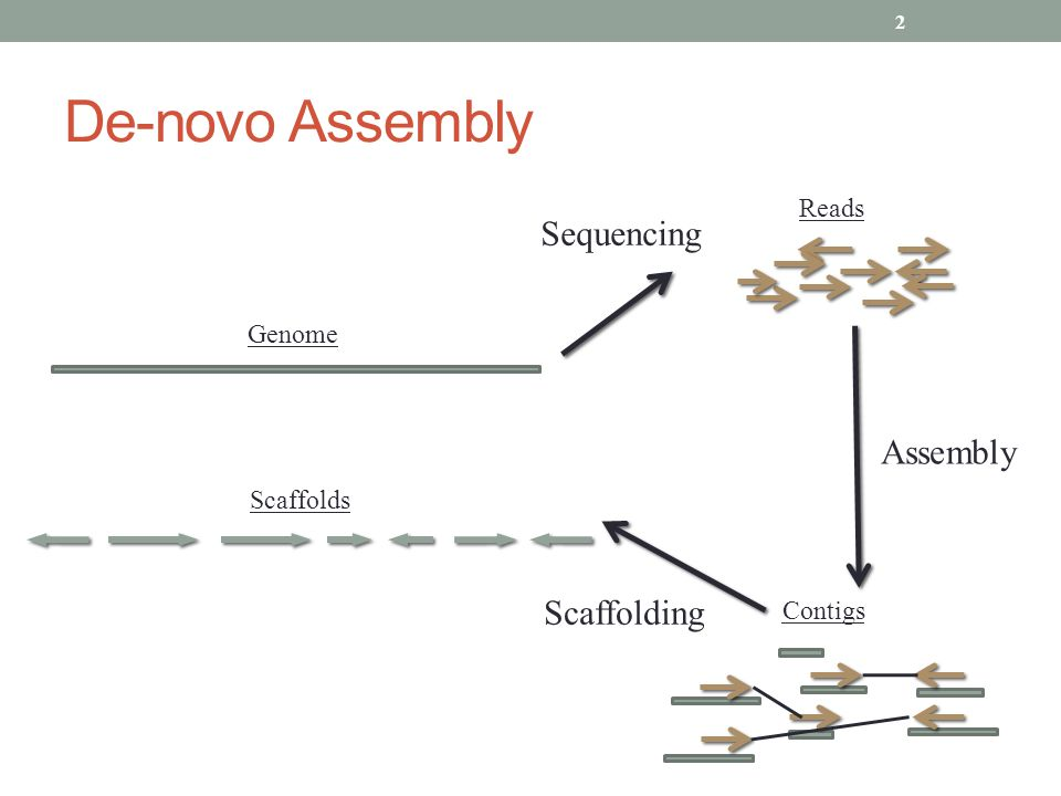 De-novo Assembly Sequencing Contigs Scaffolds Reads Genome Assembly Scaffolding 2