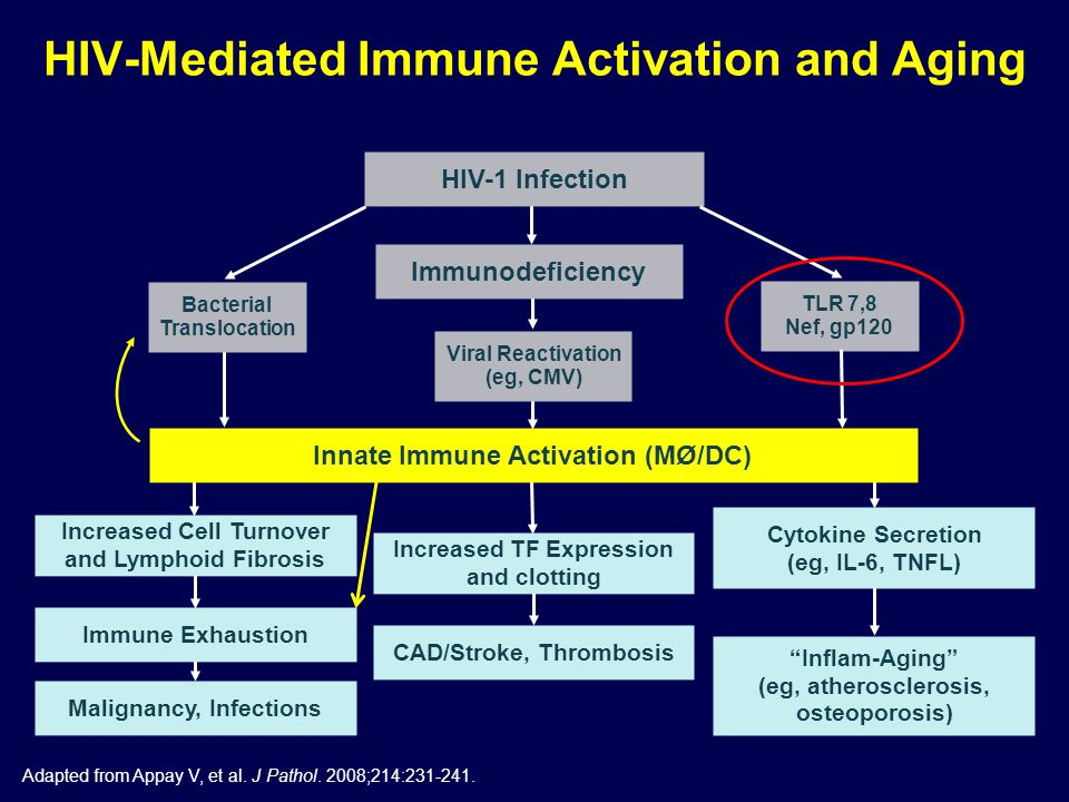 Adapted from Appay V, et al. J Pathol. 2008;214:231-241. HIV-1 Infection Immunodeficiency Bacterial Translocation Viral Reactivation (eg, CMV) Innate