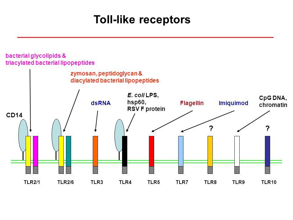 TLR2/1TLR2/6TLR3TLR4TLR7TLR8TLR10TLR9TLR5 zymosan, peptidoglycan & diacylated bacterial lipopeptides E.
