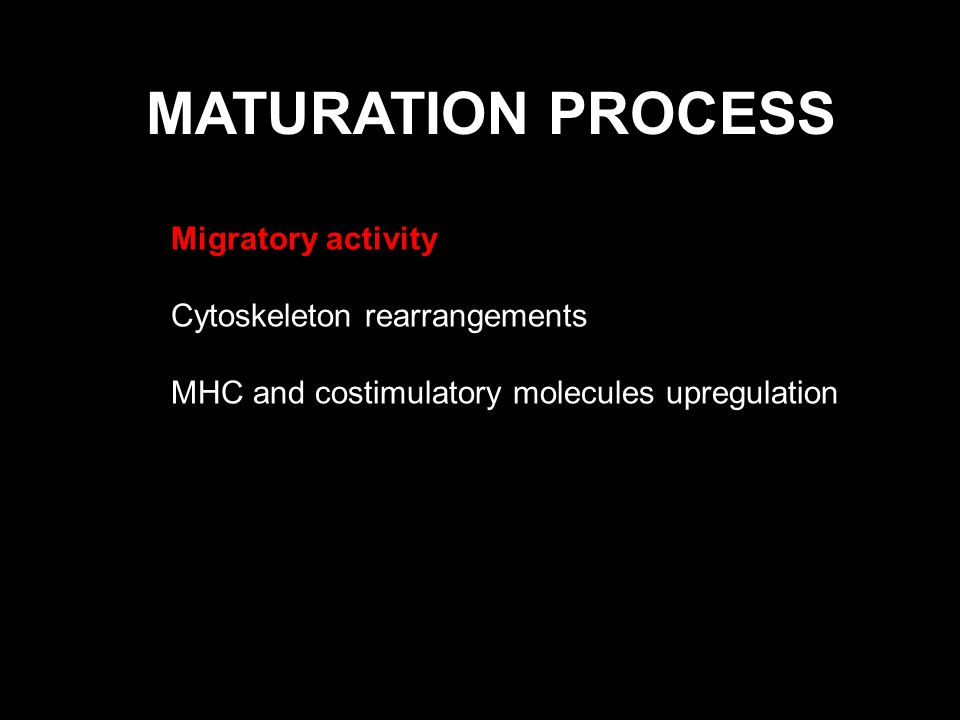 MATURATION PROCESS Migratory activity Cytoskeleton rearrangements MHC and costimulatory molecules upregulation