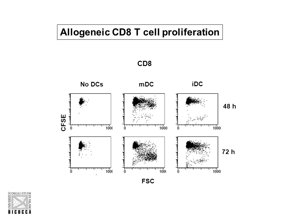 iDC mDC CD8 48 h 72 h No DCs FSC CFSE Allogeneic CD8 T cell proliferation
