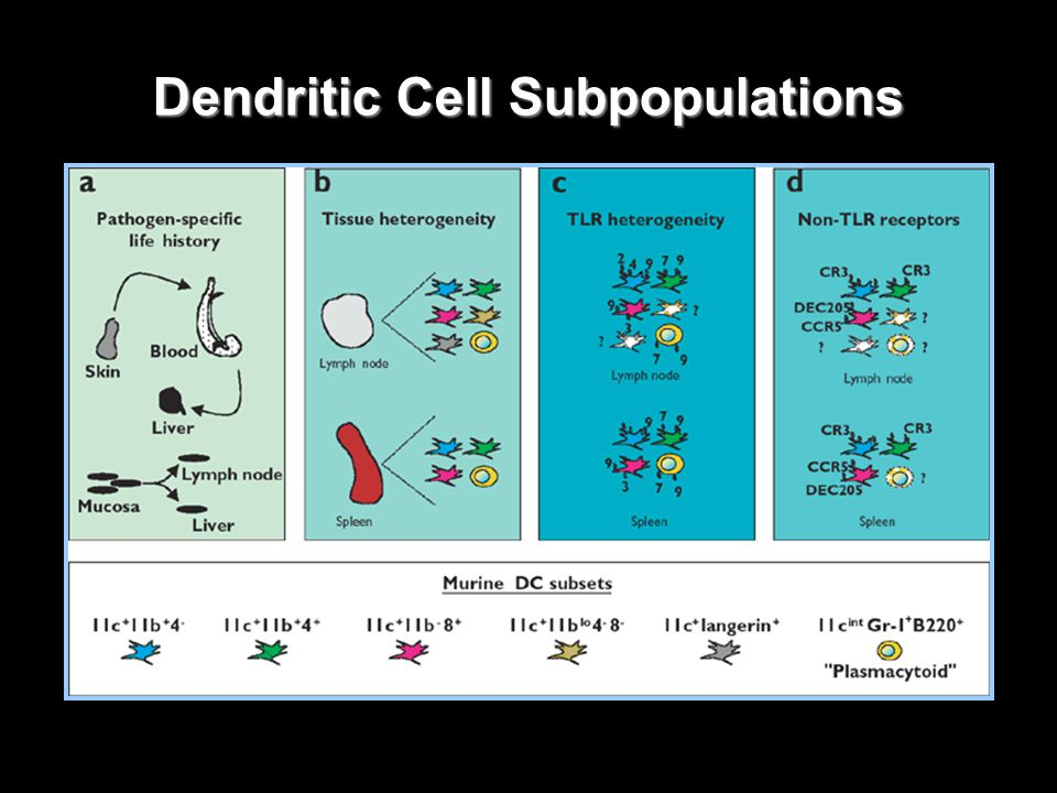 Molecules Involved in T Cell – DC Interactions