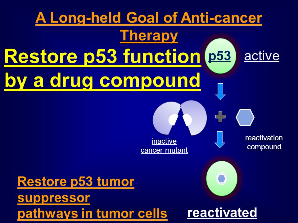 Restore p53 function by a drug compound A Long-held Goal of Anti-cancer Therapy Restore p53 tumor suppressor pathways in tumor cells p53 active inacti