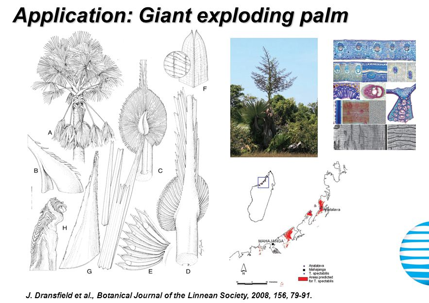 Application: Giant exploding palm J.