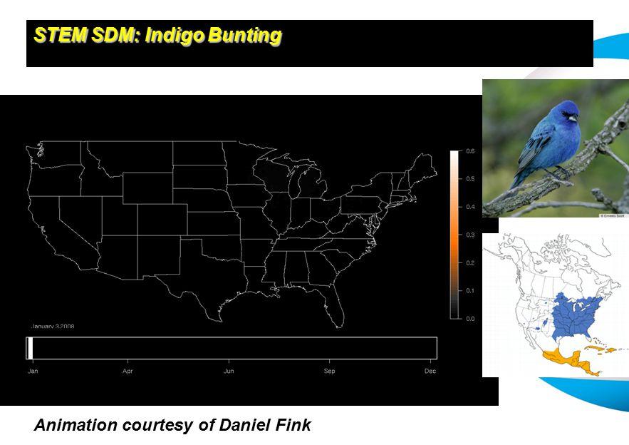 STEM SDM: Indigo Bunting Animation courtesy of Daniel Fink