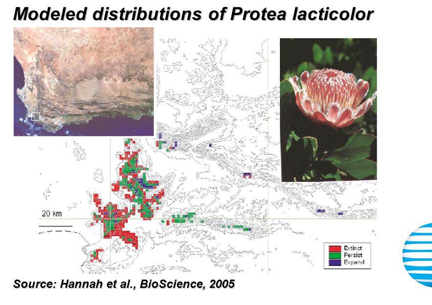 Modeled distributions of Protea lacticolor Source: Hannah et al., BioScience, 2005