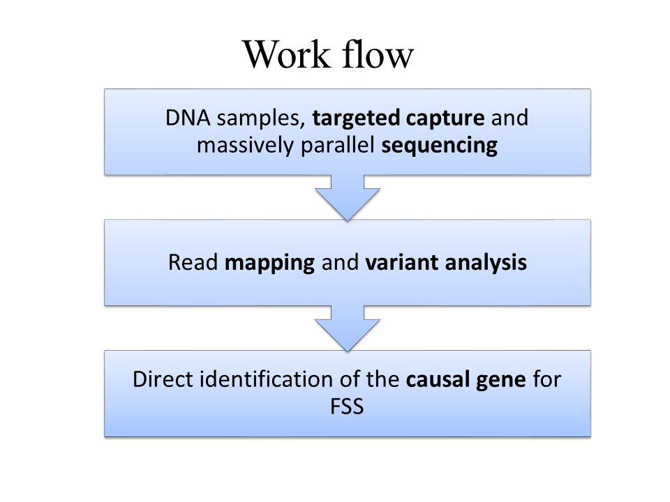 Work flow Direct identification of the causal gene for FSS Read mapping and variant analysis DNA samples, targeted capture and massively parallel sequ