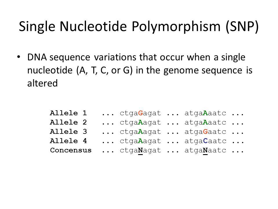 Single Nucleotide Polymorphism (SNP) DNA sequence variations that occur when a single nucleotide (A, T, C, or G) in the genome sequence is altered All