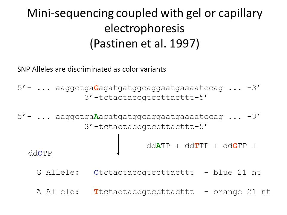 Mini-sequencing coupled with gel or capillary electrophoresis (Pastinen et al. 1997) SNP Alleles are discriminated as color variants 5'-... aaggctgaGa