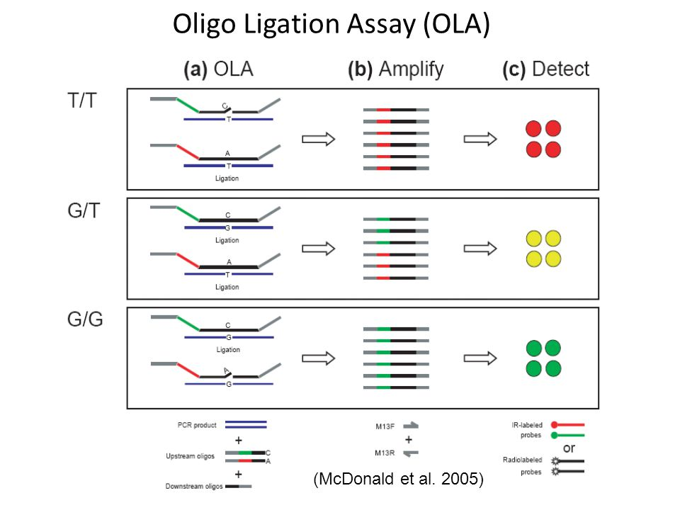 Oligo Ligation Assay (OLA) (McDonald et al. 2005)