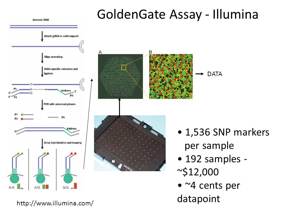 GoldenGate Assay - Illumina DATA 1,536 SNP markers per sample 192 samples - ~$12,000 ~4 cents per datapoint http://www.illumina.com/