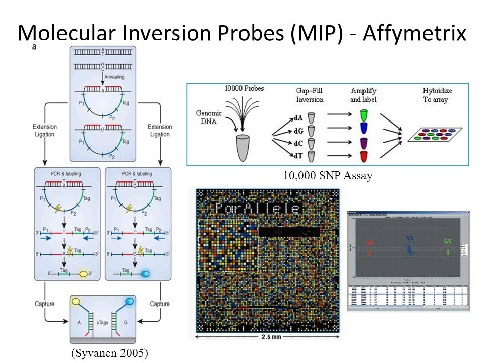 Molecular Inversion Probes (MIP) - Affymetrix (Syvanen 2005) 10,000 SNP Assay