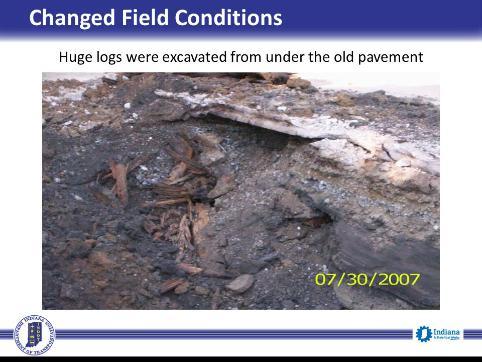 Huge logs were excavated from under the old pavement