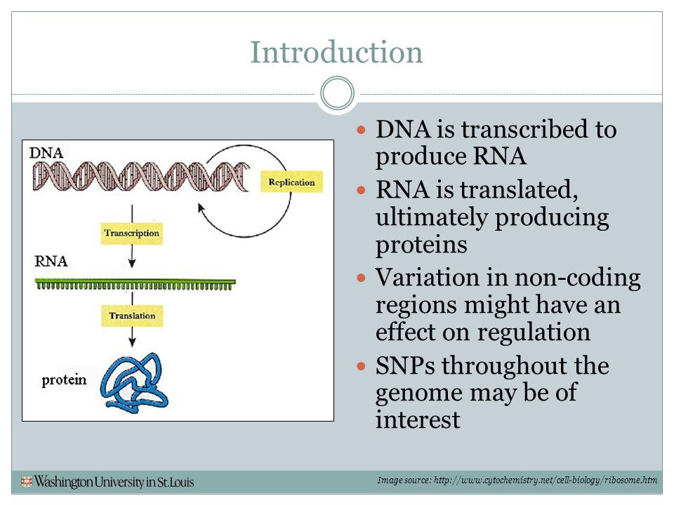 Introduction DNA is transcribed to produce RNA RNA is translated, ultimately producing proteins Variation in non-coding regions might have an effect o