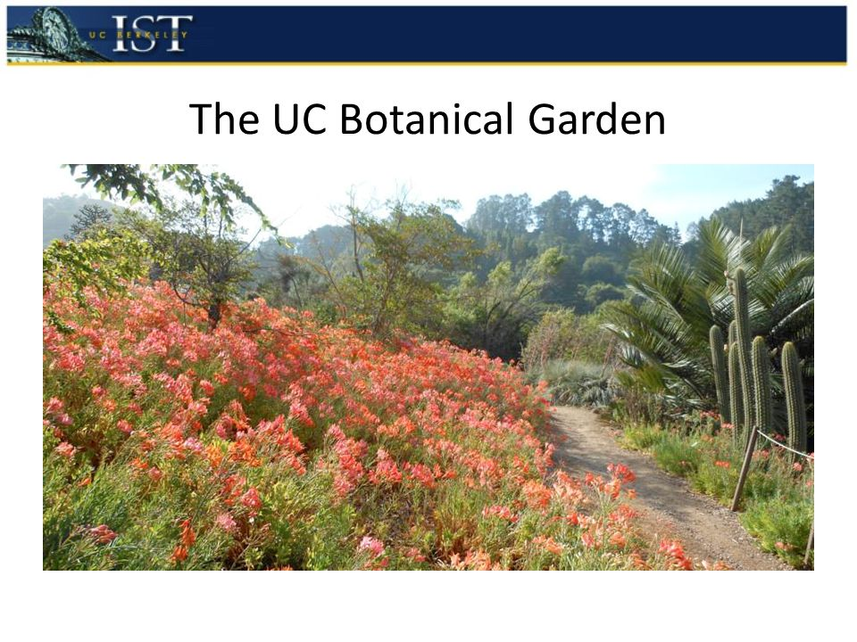 The UC Botanical Garden